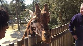 zoo Palmeyre